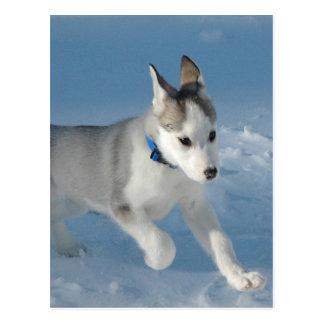 Siberian Husky Puppy Postcard