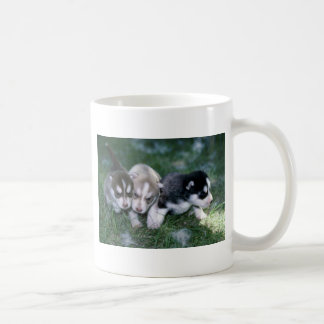Siberian Husky pups, 3 weeks Coffee Mug