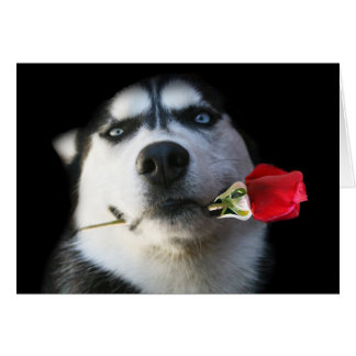 Siberian Husky Valentine's Day Card Greeting Card