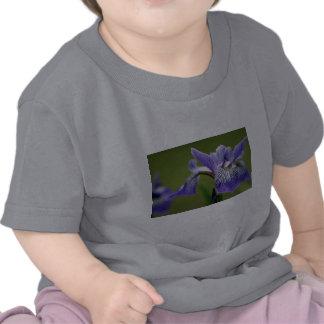 Siberian Iris Baby T-Shirt