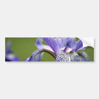 Siberian Iris Bumper Sticker