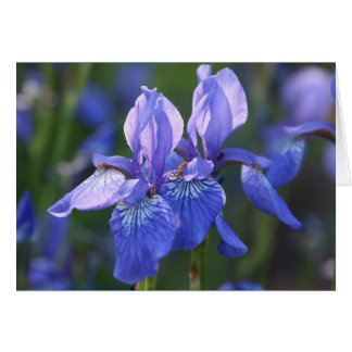 Siberian Iris Pair Card