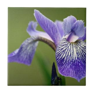 Siberian Iris  Trivet Small Square Tile