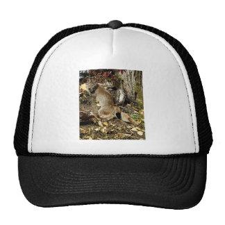Siberian Lynx Lounging Mesh Hat