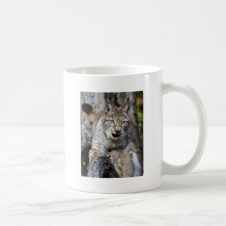 Siberian Lynx - Ready to Pounce Basic White Mug