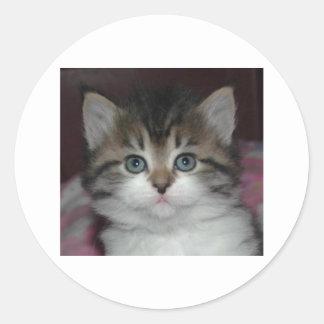 Siberian Tabby/White Kitten Classic Round Sticker