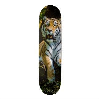 Siberian Tiger Amur Tiger Panthera Tigris Altaica Skate Decks