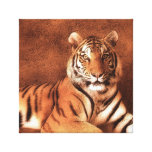 Siberian Tiger Art - Canvas Canvas Prints