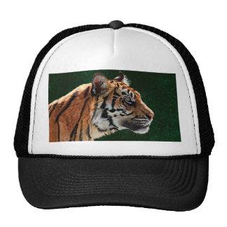 Siberian tiger cap