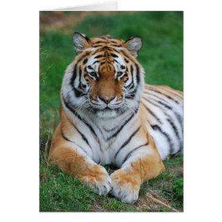 Siberian Tiger Cards