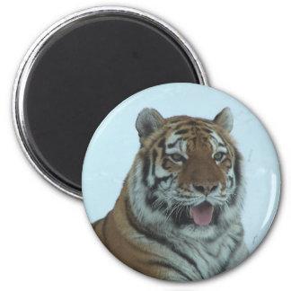 Siberian Tiger Close Up Face 2 Magnet