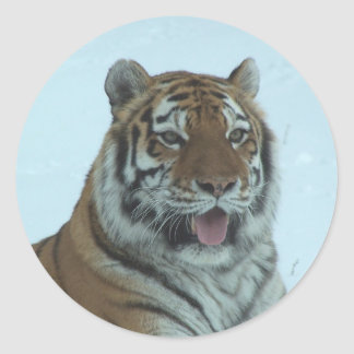 Siberian Tiger Close Up Face 2 Round Stickers