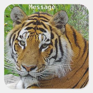 Siberian Tiger Closeup Photo of Face Square Sticker