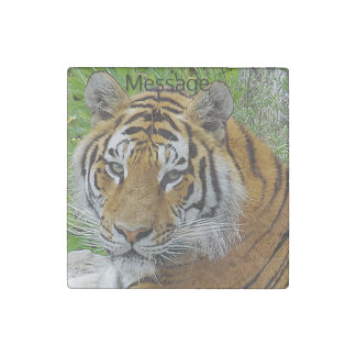 Siberian Tiger Closeup Photo of Face Stone Magnet