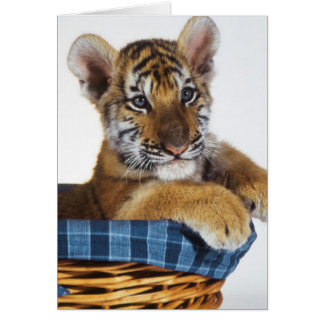 Siberian Tiger Cub in basket Greeting Card