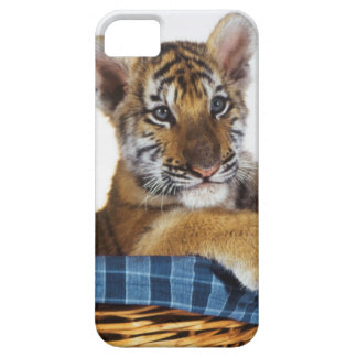 Siberian Tiger Cub in basket iPhone 5 Cases