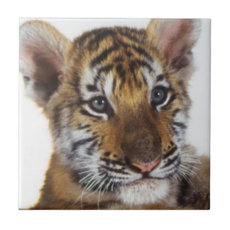 Siberian Tiger Cub in basket Tile