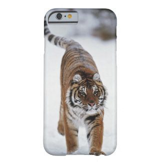 Siberian Tiger In Snow Barely There iPhone 6 Case