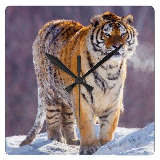 Siberian tiger in snow, China Square Wall Clock