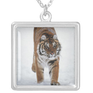 Siberian Tiger In Snow Silver Plated Necklace