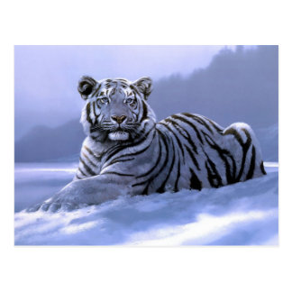 Siberian Tiger In The Wintertime Art Postcard