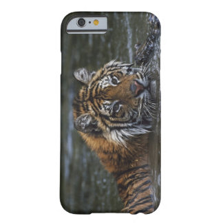 Siberian Tiger In Water Barely There iPhone 6 Case