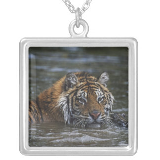 Siberian Tiger In Water Silver Plated Necklace