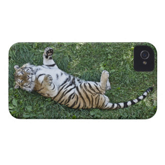 Siberian Tiger iPhone 4 Case