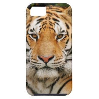 Siberian Tiger iPhone 5 case
