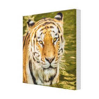 SIBERIAN TIGER ON CANVAS PRINT