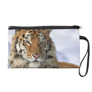 Siberian Tiger, Panthera tigris altaica, Asia Wristlet Clutches