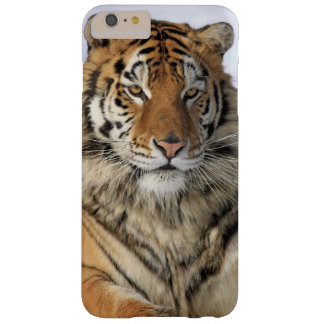 Siberian Tiger, Panthera tigris altaica, Asia, Barely There iPhone 6 Plus Case