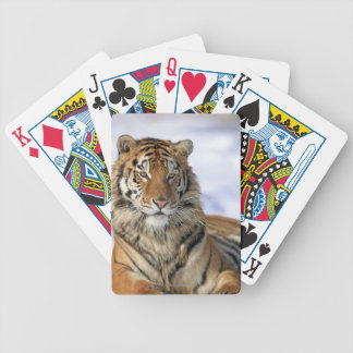 Siberian Tiger, Panthera tigris altaica, Asia Bicycle Playing Cards