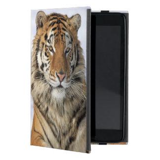Siberian Tiger, Panthera tigris altaica, Asia Cover For iPad Mini