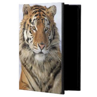 Siberian Tiger, Panthera tigris altaica, Asia iPad Air Case