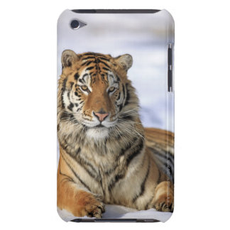 Siberian Tiger, Panthera tigris altaica, Asia iPod Touch Cover