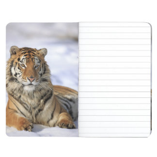 Siberian Tiger, Panthera tigris altaica, Asia Journal