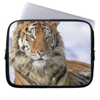 Siberian Tiger, Panthera tigris altaica, Asia, Laptop Sleeve