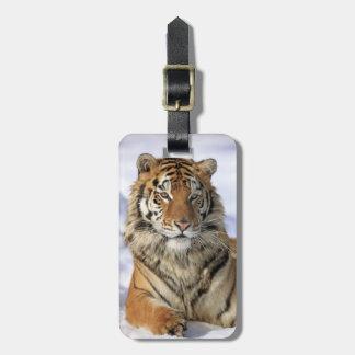 Siberian Tiger, Panthera tigris altaica, Asia Luggage Tag