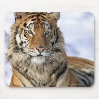 Siberian Tiger, Panthera tigris altaica, Asia Mouse Mat
