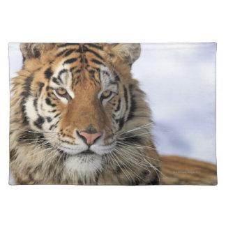 Siberian Tiger, Panthera tigris altaica, Asia Placemat