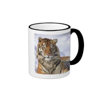 Siberian Tiger, Panthera tigris altaica, Asia Ringer Mug
