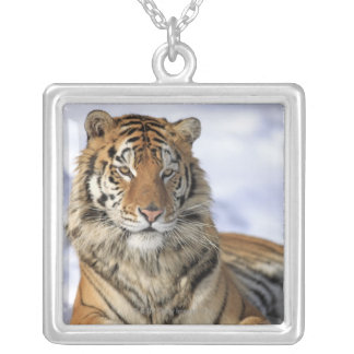 Siberian Tiger, Panthera tigris altaica, Asia, Silver Plated Necklace