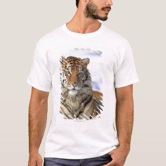 Siberian Tiger, Panthera tigris altaica, Asia T-Shirt