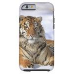 Siberian Tiger, Panthera tigris altaica, Asia, Tough iPhone 6 Case