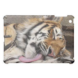 Siberian tiger Panthera tigris altaica licking iPad Mini Cases