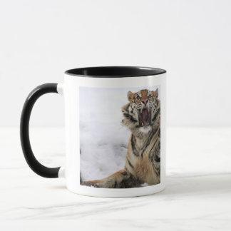 Siberian Tiger (Panthera tigris altaica) Mug