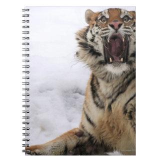 Siberian Tiger (Panthera tigris altaica) Notebooks
