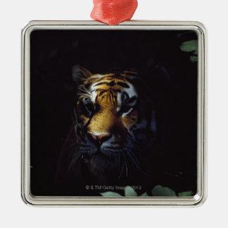 Siberian Tiger (Panthera Tigris Altaica) Peers Christmas Ornament