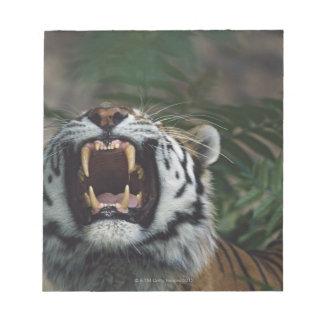 Siberian Tiger (Panthera Tigris) Bares Fangs Notepad